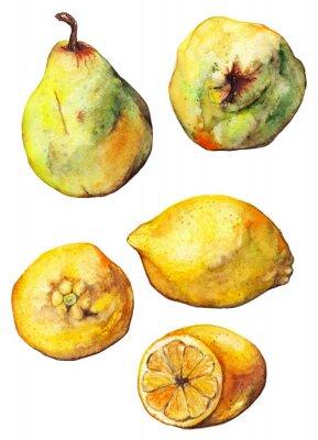 Nálepka Akvarel citron citrusové ovoce hruška set izolované