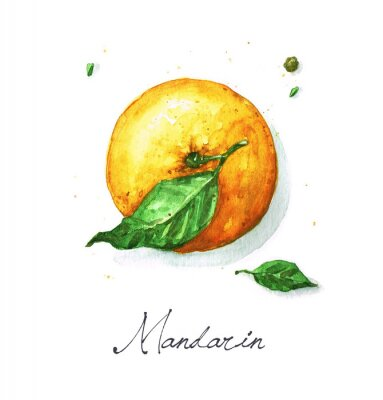 Nálepka Akvarel Food Malba - Mandarin nebo oranžová