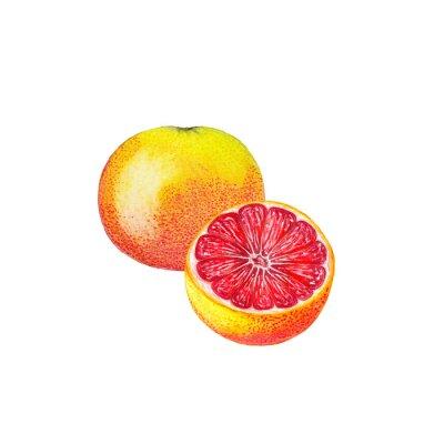 Nálepka akvarel grapefruit