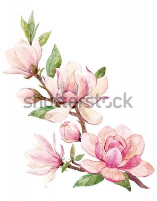 Nálepka Akvarel ilustrace pobočky s květy růžové magnólie květ jarní kartu