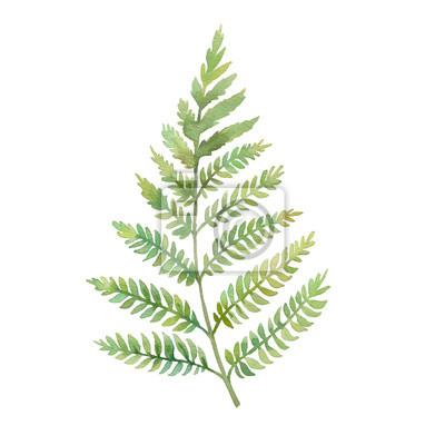 Akvarel kapradina list. Ručně malované zeleň větev na bílém pozadí. rostlina silueta