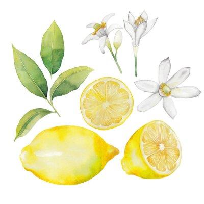 Nálepka Akvarel kolekce citron