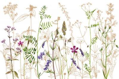 Nálepka akvarel kreslení květin a rostlin