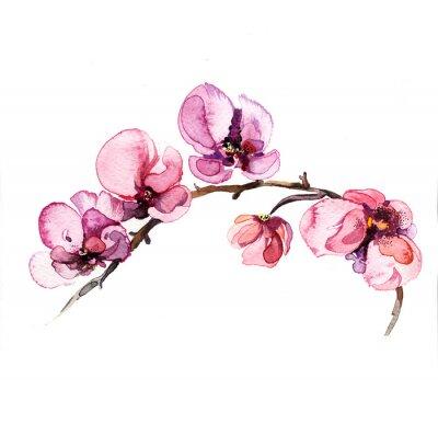 Nálepka akvarel květiny orchidej izolovaných na bílém pozadí