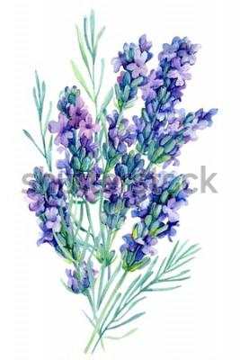 Nálepka akvarel kytice levandule květiny ilustrace na izolované bílém pozadí