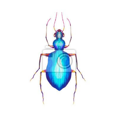 Akvarel modré brouk ilustrace. Ručně tažené hmyzu na bílém pozadí. Natural tištěné