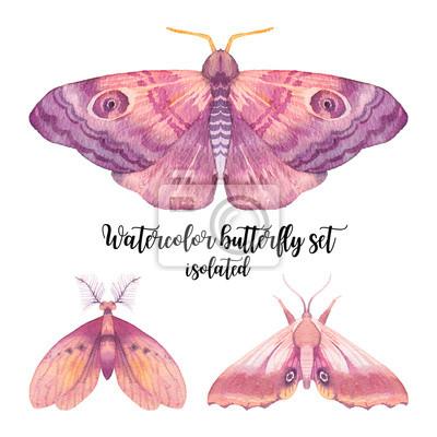 Akvarel motýl nastavit. Ručně malovaná sbírka hmyzu na bílém pozadí. přírodní ilustrace