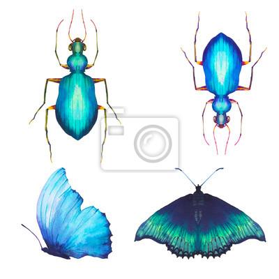 Akvarel motýlů a brouků set. Ručně malovaná sbírka hmyzu na bílém pozadí. přírodní ilustrace