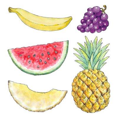 Nálepka Akvarel obraz z různých druhů ovoce