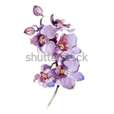 Nálepka Akvarel orchidej kytice izolovaných na bílém pozadí.