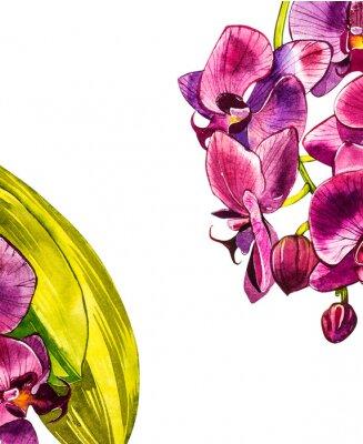 Nálepka Akvarel orchidej větev, ručně tažené květinové ilustrace na bílém pozadí. Flora akvarel ilustrace, botanická malba, ruční kresba.
