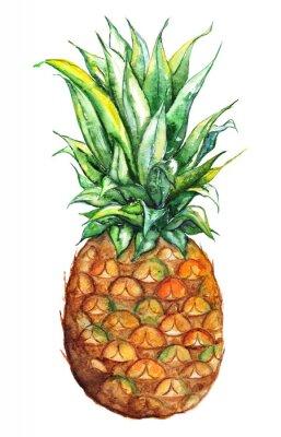 Nálepka Akvarel ručně malovaná ananasový exotické tropické ovoce izolované