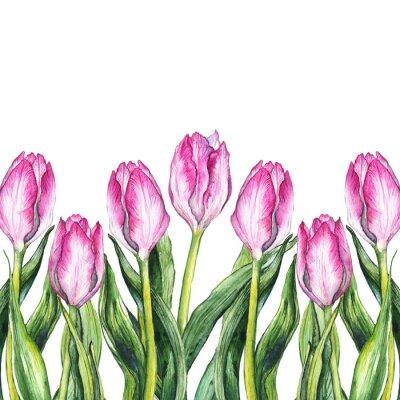 Nálepka Akvarel růžový tulipány příroda border frame