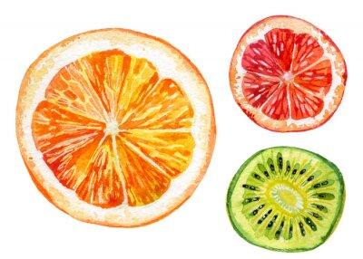 Nálepka Akvarel set čerstvé pomeranče, kiwi a grapefruity