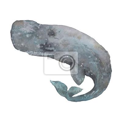 Akvarel vorvaň. Ručně malované realistické cachalot velryba ilustrace na bílém pozadí. Realistické podvodní živočišných výtvarné