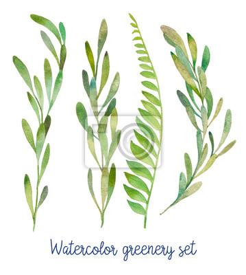 Akvarel zeleň set. Ručně malovaná divoké zelené rostliny na bílém pozadí.