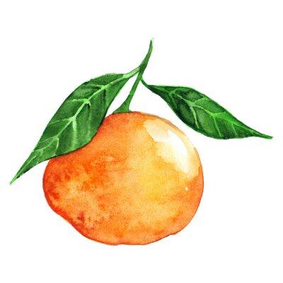 Nálepka Akvarel zralé oranžové mandarinky citrusové ovoce izolované