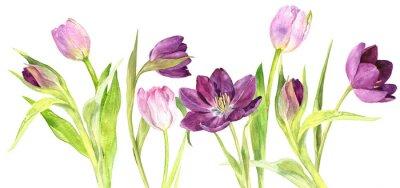 Nálepka Akvarelové fialové a růžové tulipány