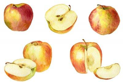Nálepka Apple kresba akvarel