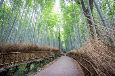 Nálepka Arashiyama Bamboo Grove z Kyoto, Japonsko.