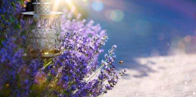 Nálepka art Letní nebo jarní Krásná zahrada s květy levandulové
