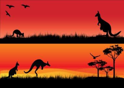 Nálepka Australian Kangaroos in the sunset