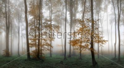 Nálepka Autumn foggy forest. Balkan Mountains, Bulgaria.