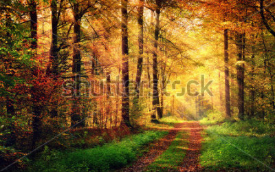 Nálepka Autumn forest scenery with rays of warm light illumining the gold foliage and a footpath leading into the scene