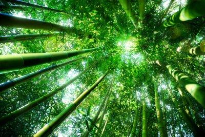Nálepka bamboo forest - zen koncepce