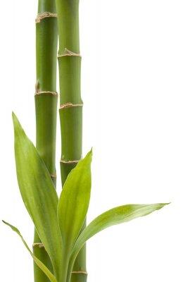 Nálepka Bamboo Plant