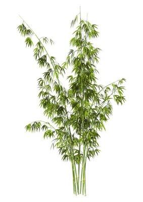 Nálepka Bamboo Tree