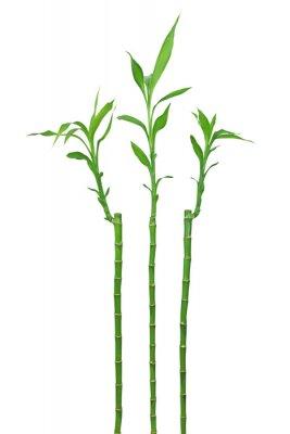Nálepka Bambou
