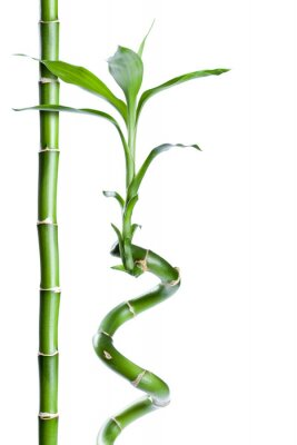 Nálepka Bambou zen