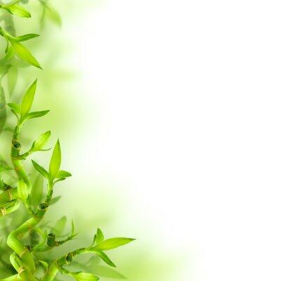 Nálepka Bambus a zelené listy, pozadí