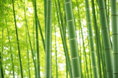 Nálepka bambusové lesy