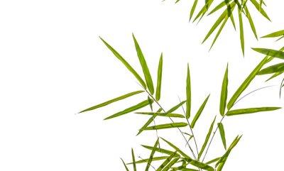 Nálepka bambusové listy izolovaných na bílém pozadí, ořezové cesty možné i