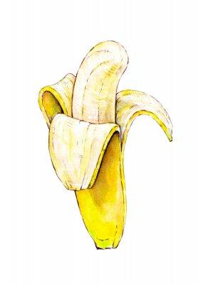 Nálepka Banana na bílém pozadí. Akvarel barevné ilustrace. Tropické ovoce. Ruční práce