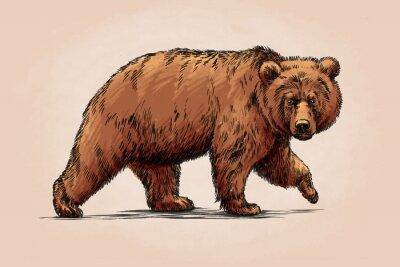Nálepka Barva Engrave izolované medvěd grizzly
