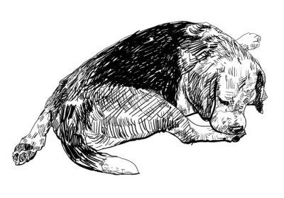 Nálepka Beagle je kousání jemně na něj nohu.