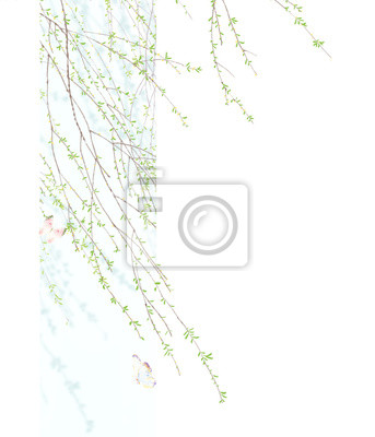 Beautiful spring willow branch. Spring willow branch with buds and catkins.Wedding ornament concept. Floral poster, invite. Decorative greeting card or invitation design background
