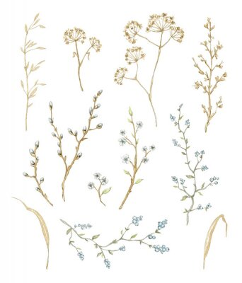 Nálepka Big set with dry herbs, willow branches and twigs with flowers and berries isolated on white background. Watercolor hand drawn illustration