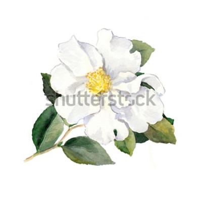 Nálepka Bílá květina. Akvarel botanické ilustrace
