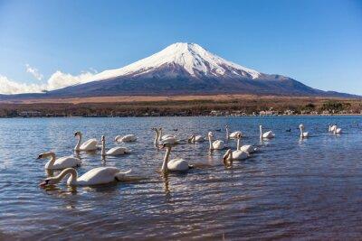 Nálepka bílá labuť swimimg v Yamanaka jezeře, 5 jezero fuji
