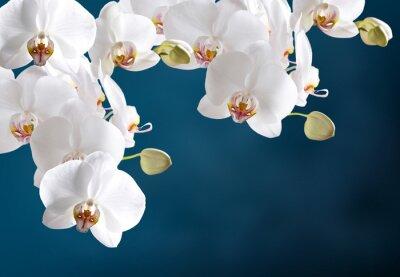Nálepka Bílá orchidej
