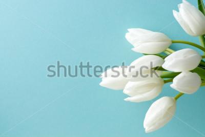 Nálepka bílý Tulipán