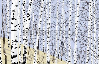Nálepka birch grove in the spring