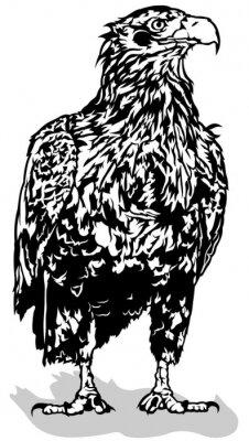 Nálepka Black and White Eagle - nastínil ilustrace, Vector