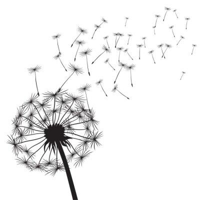 Nálepka Black vector dandelions