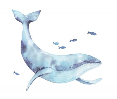 Nálepka Blue whale watercolor illustration isolated on white. Big wild underwater animal beautiful blue violet white watercolor whale ballena painting. Mammal marine or oceanic water animal swimming.