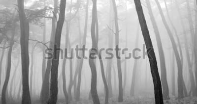 Nálepka Borovice vidět skrz mlhu